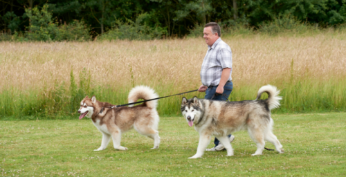 Dogs take the `lead' to help Air Ambulance